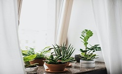 Your Guide to Houseplants
