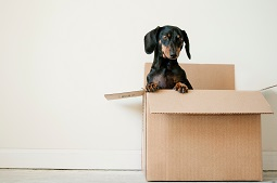 Moving with Pets – Things You Should Consider